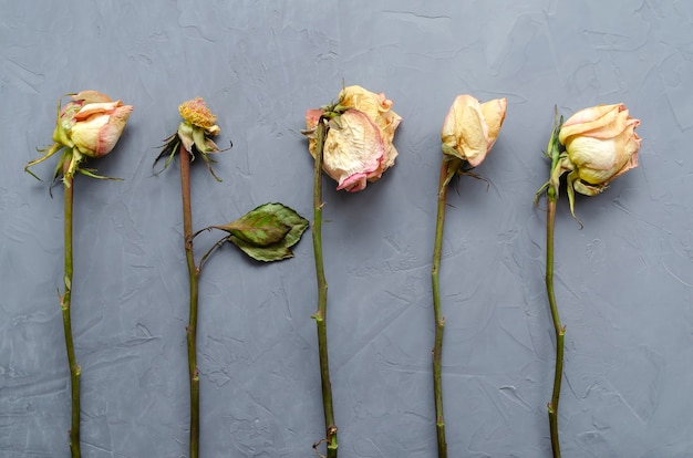 Des roses fanées avec des pétales tombés et des feuilles séchées se trouvent parallèlement dans une rangée sur un gris ultime