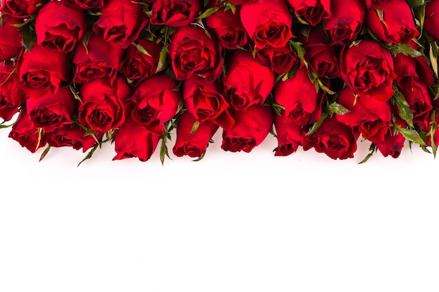 Roses sur un fond blanc