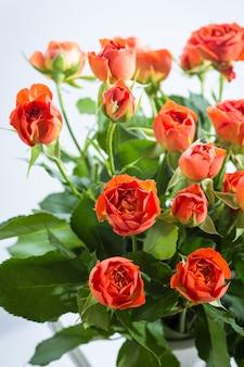 Roses oranges dans un vase