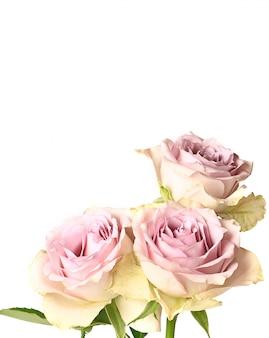Roses rétro shabby chic isolé sur fond blanc