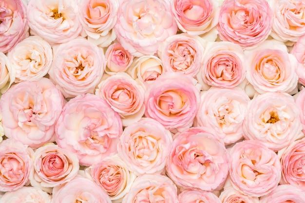 Roses roses dans un lit de fleurs