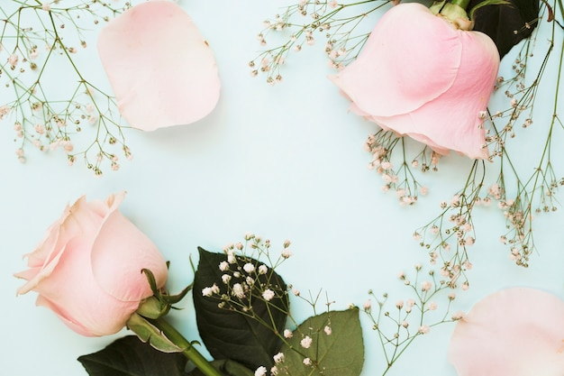 Roses roses avec des fleurs d'haleine de bébé sur fond bleu pastel