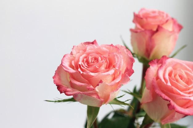 Roses roses sur fond gris