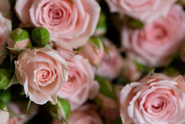 Des roses roses font surface pour la fête des mères ou la saint-valentin ou un cadeau d'anniversaire