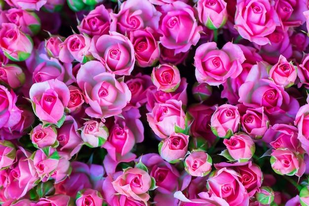 Roses roses fraîches avec des feuilles vertes - fond ensoleillé de printemps nature. flou artistique et bokeh
