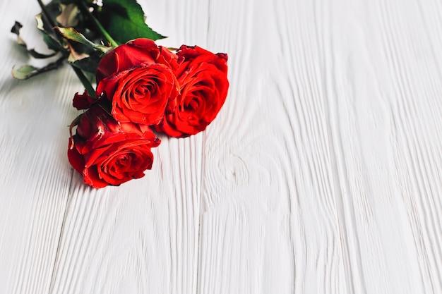 Roses rouges sur fond blanc