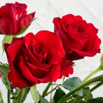 Roses rouges sur fond blanc.
