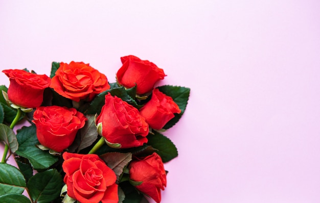 Roses rouges sur fond rose