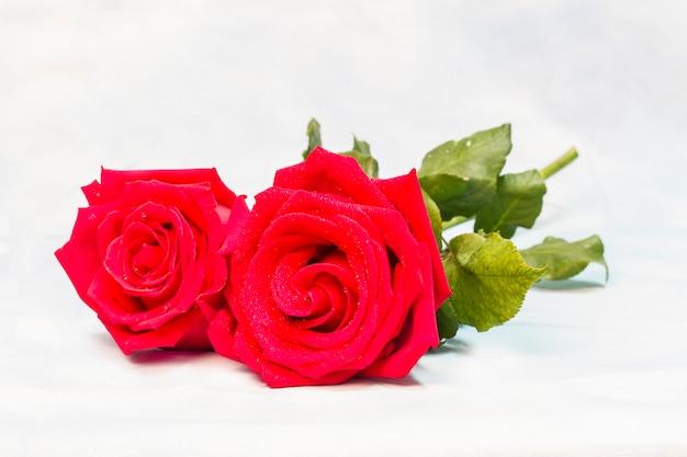 Roses rouges naturelles avec des gouttes d'eau