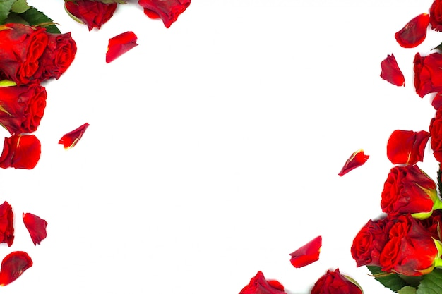 Roses rouges et pétales sur blanc