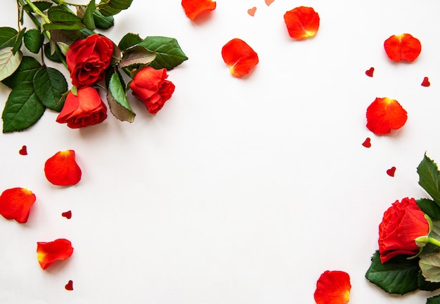 Roses rouges et pétales sur fond blanc, vue de dessus