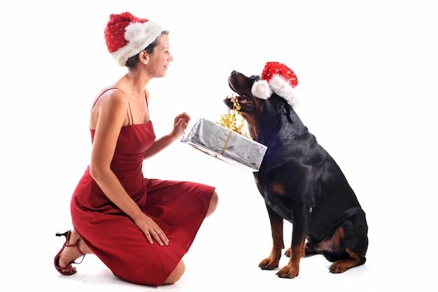 Rottweiler, cadeau et femme