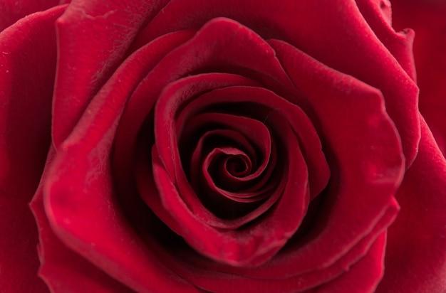 Rouge floral doux