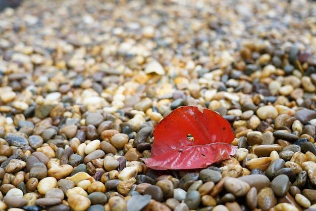 Rouge gauche sur le rocher