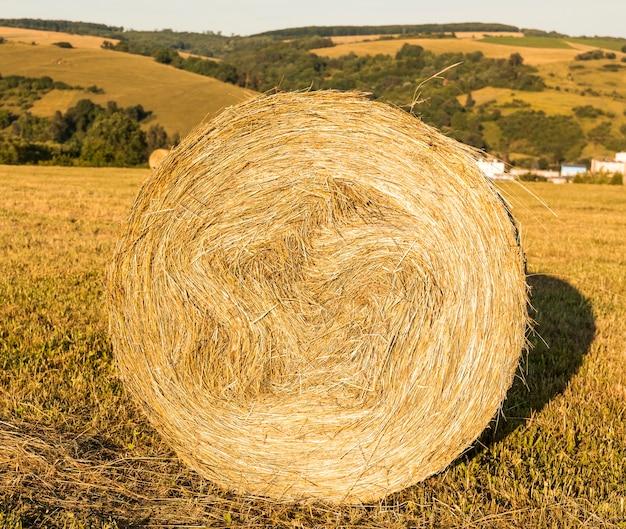 Rouleau de foin dans le champ