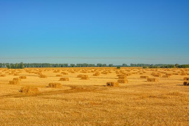 Rouleau de foin sur prairie sur fond de ciel bleu