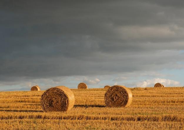 Rouleaux de paille d'or sur un champ de blé en pente un soir d'été après la pluie