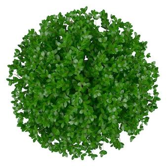 Round plante