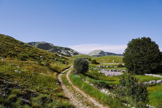 Route alpine rocheuse parmi les buissons d'herbes et la verdure