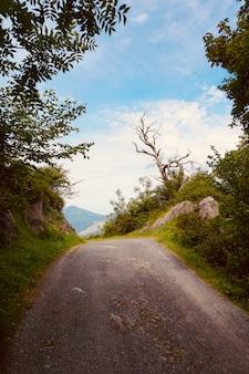 Route avec des arbres verts en automne dans la nature