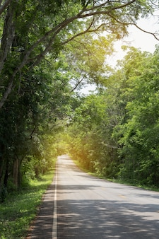 Route avec des arbres verts autour et des arbres penché sur la route.