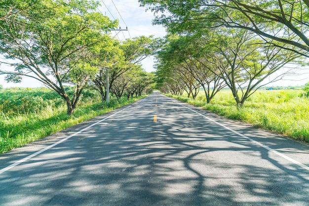 Route d'asphalte en forêt