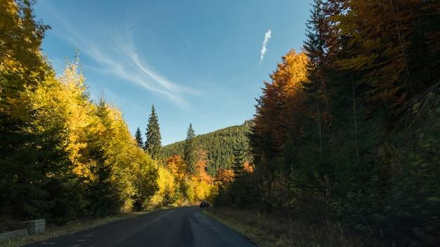 Route asphaltée dans la forêt