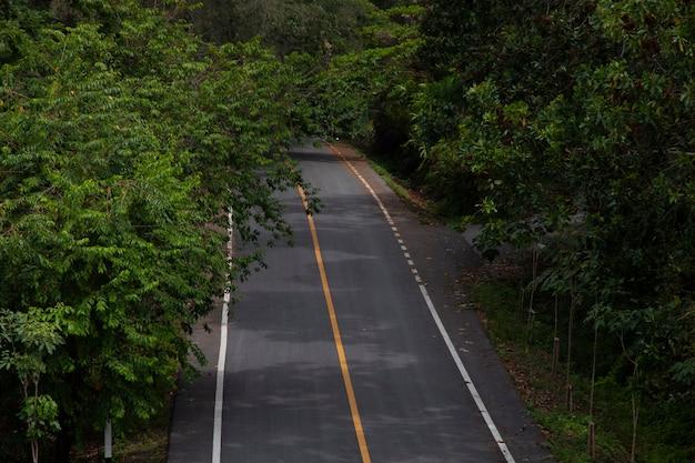 Route asphaltée dans la forêt.