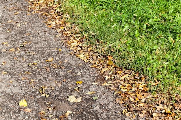 Route asphaltée et herbe sur le bord de la route, gros plan