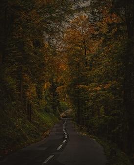 Route asphaltée noire entre les arbres bruns pendant la journée
