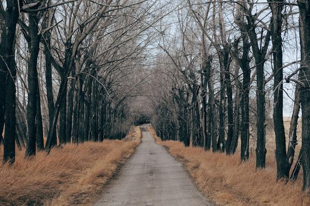Route en béton entourée d'herbe sèche et d'arbres nus