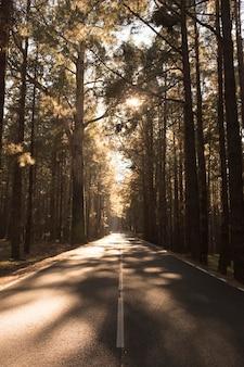 Une route calme et vide traversant une forêt pleine de beaux arbres