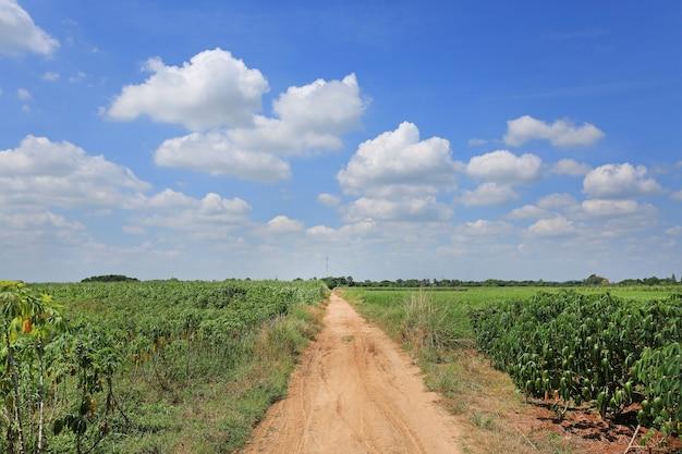 Route de campagne dans le champ de plantation de manioc.