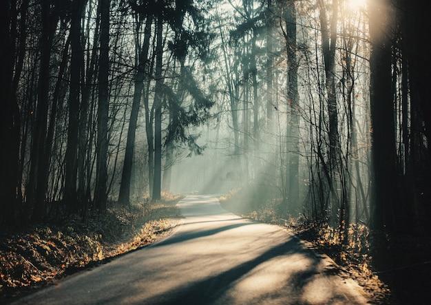 Route de campagne dans les montagnes des sudètes en pologne