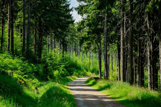 Route de campagne dans les montagnes des sudètes, pologne
