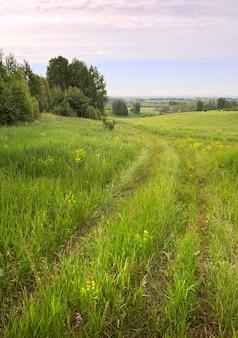 Route de campagne en été traces de roues dans un pré avec de l'herbe verte et des fleurs sauvages jaunes