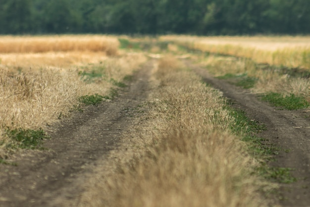 Route de campagne, il y a un bosquet à l'horizon