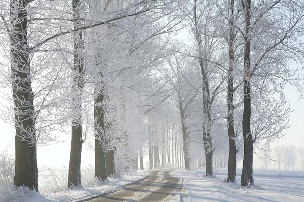 Route de campagne menant parmi les arbres givrés