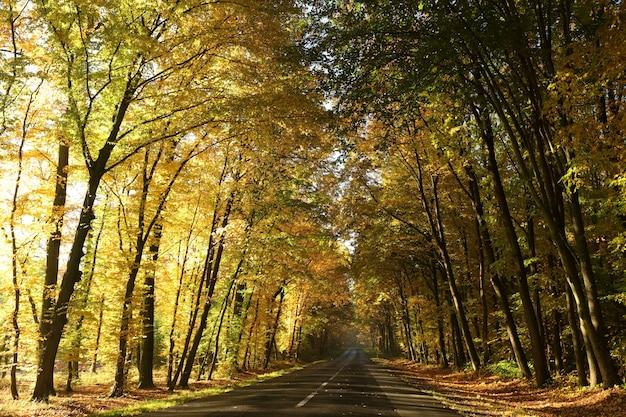 Route de campagne parmi les chênes sur un matin d'automne ensoleillé