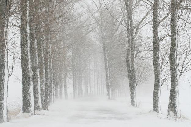 Route de campagne pendant une tempête de neige