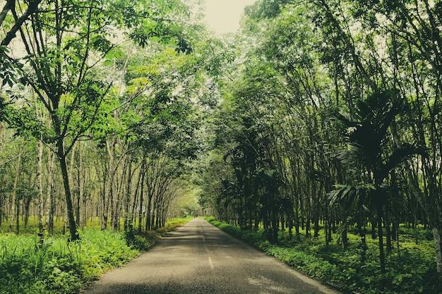 Route de campagne en thaïlande entre la plantation de caoutchouc