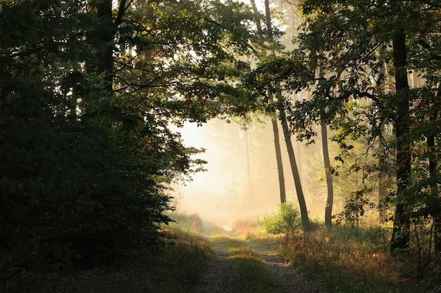 Route de campagne à travers la forêt d'automne un matin brumeux