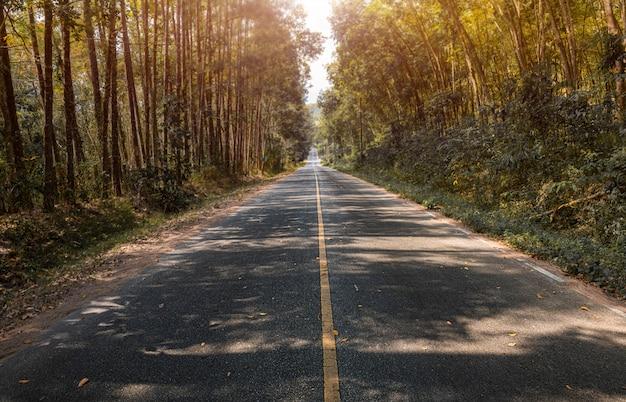 Route avec côté arbres en automne.