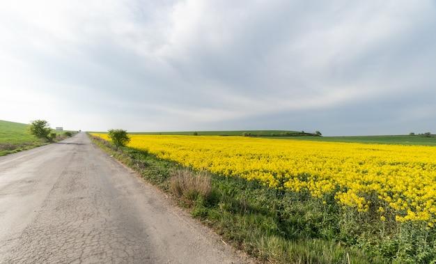 Route courant à côté d'un beau champ de fleurs jaunes