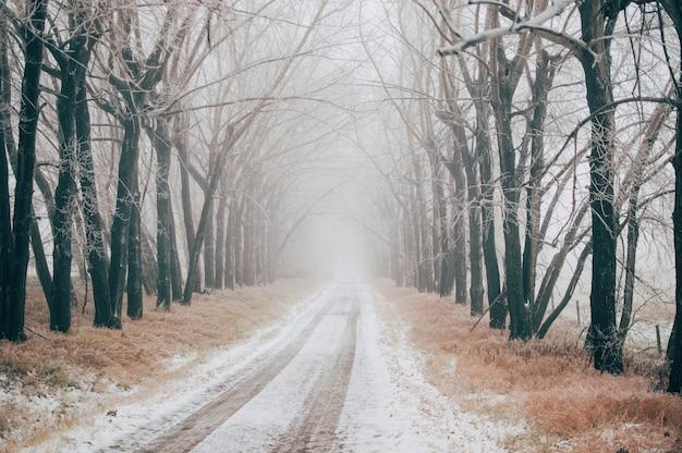 Route couverte de neige entre les arbres nus sur une journée d'hiver brumeuse