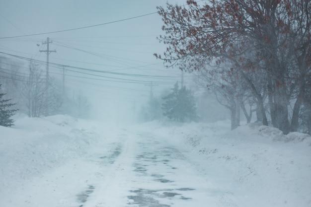 Route couverte de neige entre les arbres