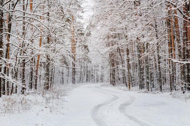 Route dans une belle forêt de pins enneigés en hiver.