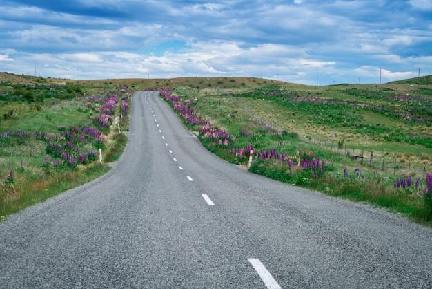 Route dans le champ de lupin, nouvelle-zélande