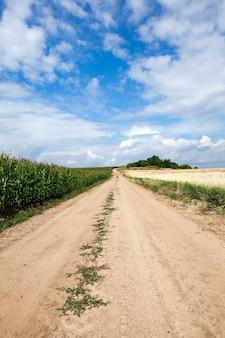 Route dans un champ - route de campagne pavée, passant par un champ agricole