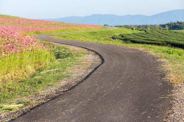Route dans la ferme avec fond de montagne au coucher du soleil